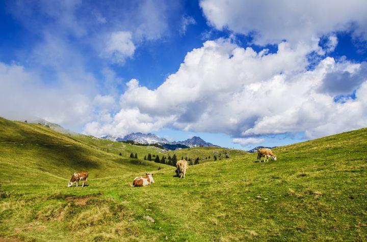 Les Stoïciens modernes doivent-ils être végétariens ? (MassimoPigliucci)